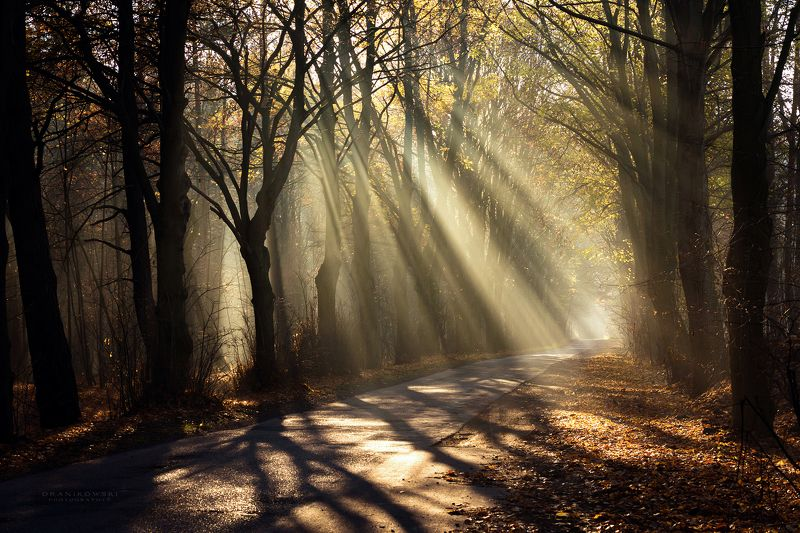 sun rays shining through trees road mist path foggy magic dranikowski autumn light beams Sun rays shining through treesphoto preview
