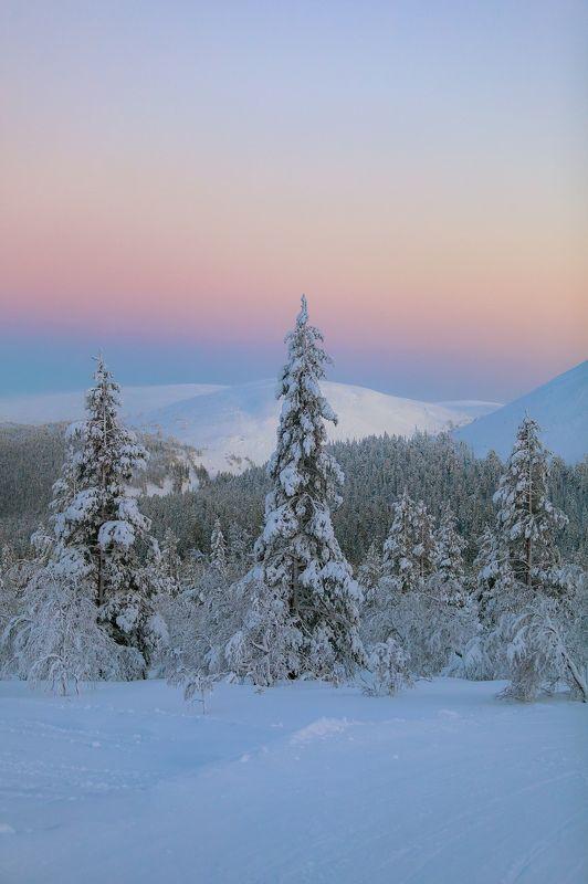 зима, снег, вечер, горы, лес ***photo preview