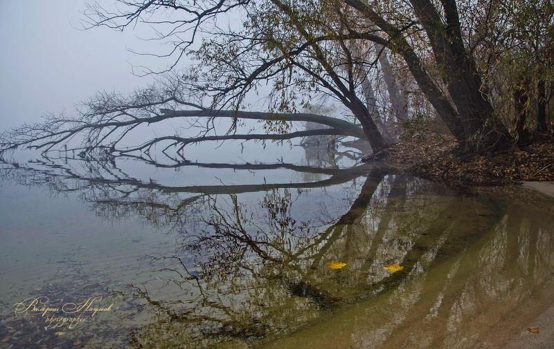 осень, утро, ноябрь, туман, отражения Туманное утро ноябряphoto preview