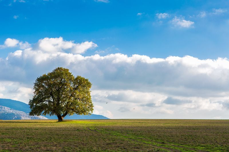 дерево, поле, пейзаж, облака ***photo preview