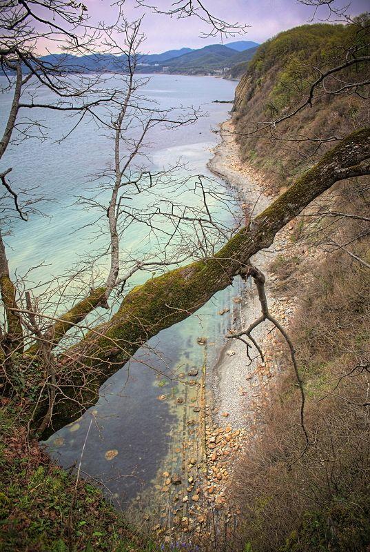 скала, дерево, вода, море, высота, природа view from cliffphoto preview