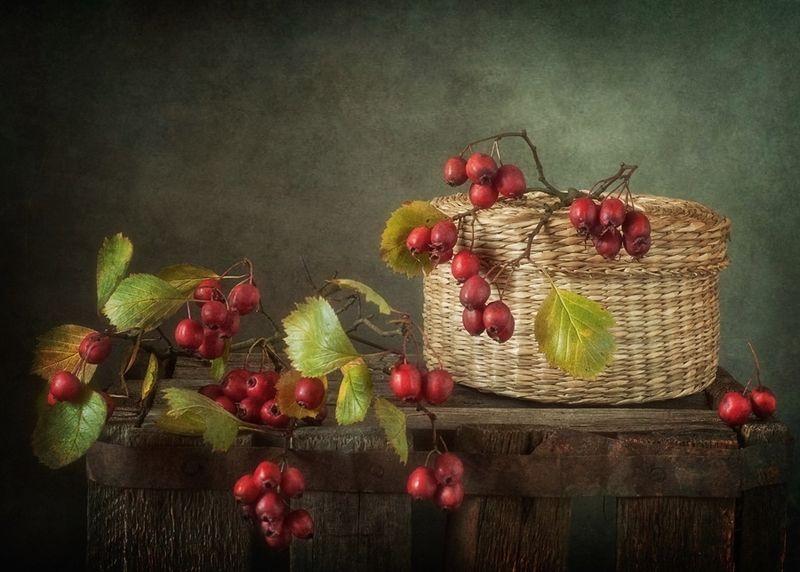 натюрморт,боярышник,осень с боярышником...photo preview