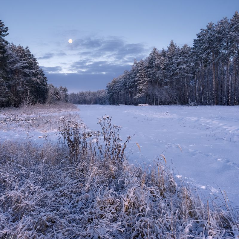 утро, мороз, снег, зима, Луна, полнолуние, предрассветные сумерки, холод, сосны, лес, winter, morning, forest, pine trees, Moon, cold, snow, colors, twilight, before sunrise, frosty morning морозное утроphoto preview