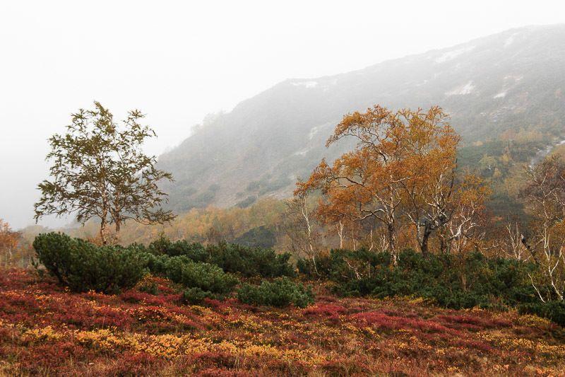 Камчатка, осень, тундра, береза, дождь Дождливая осенняя Камчаткаphoto preview