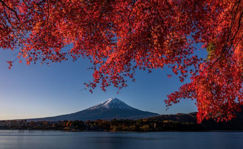 fuji landscape japan autumn nature mountain lake travel [ The majestic Mt. Fuji of autumn season ]photo preview