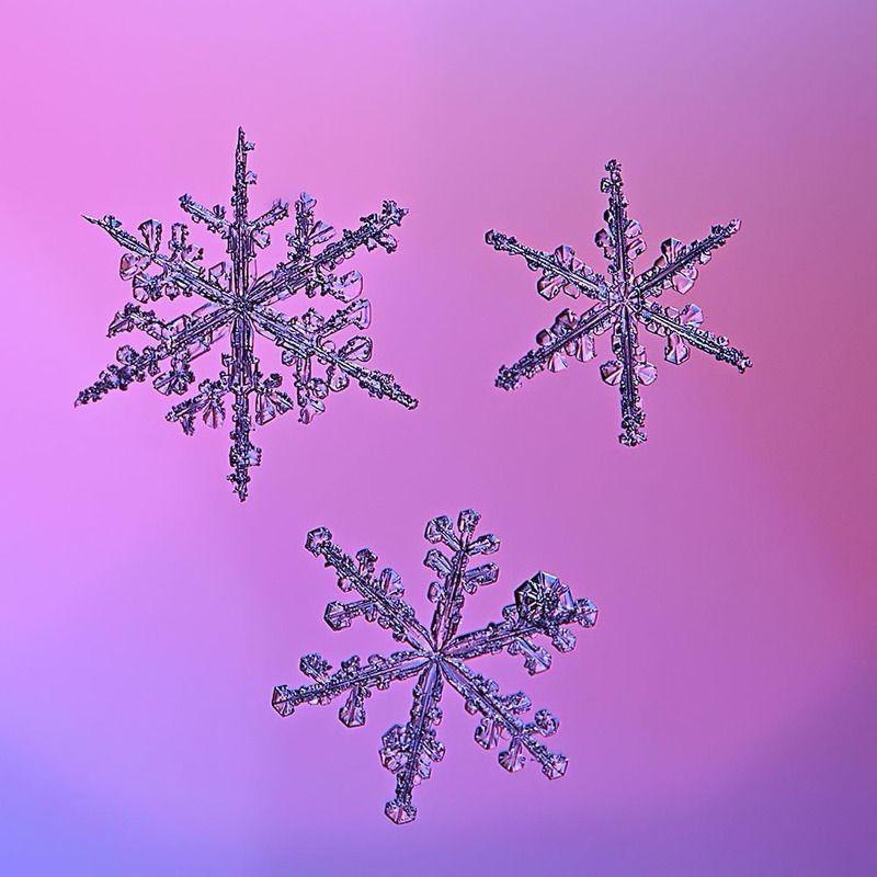 снежинка, снежинки, макро, природа, кристалл, зима Три по триphoto preview