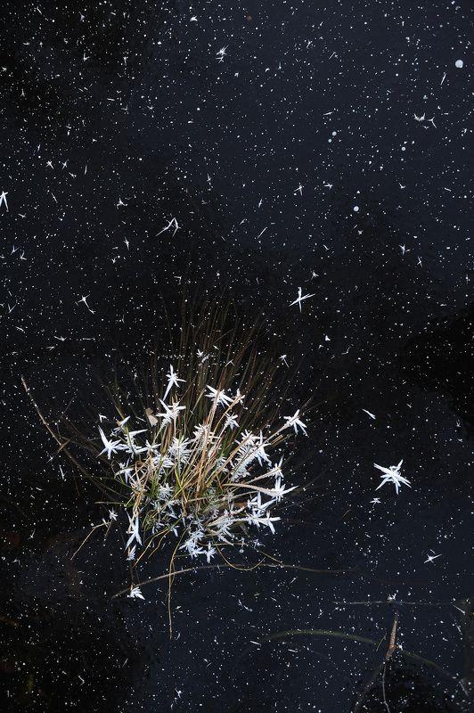 природа вода водоем озеро пруд растение растительность узор абстракция паттерн текстура воздух пузырьки толща лед мороз зима осень ***photo preview