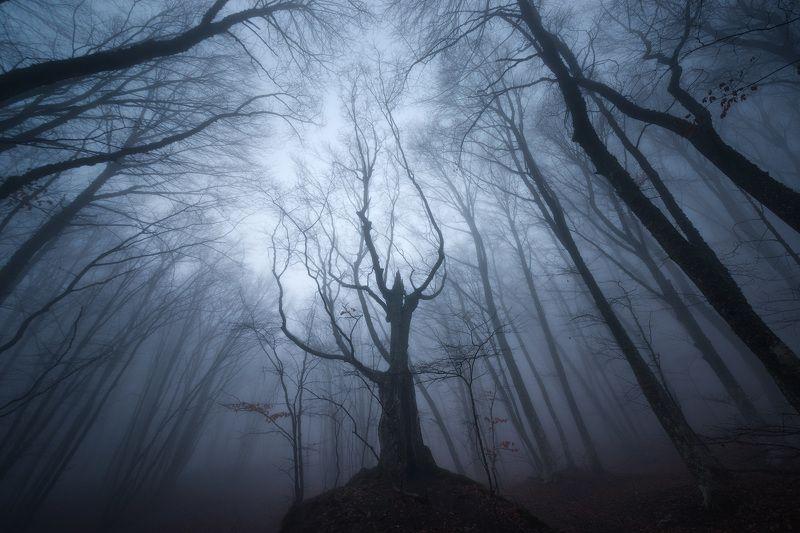 крым, туман, мистика, тайна, мистический крым, буковый лес, чатыр-даг, горный лес, туризм, путешествия, фототур, фототуры, туры по крыму Шаманphoto preview