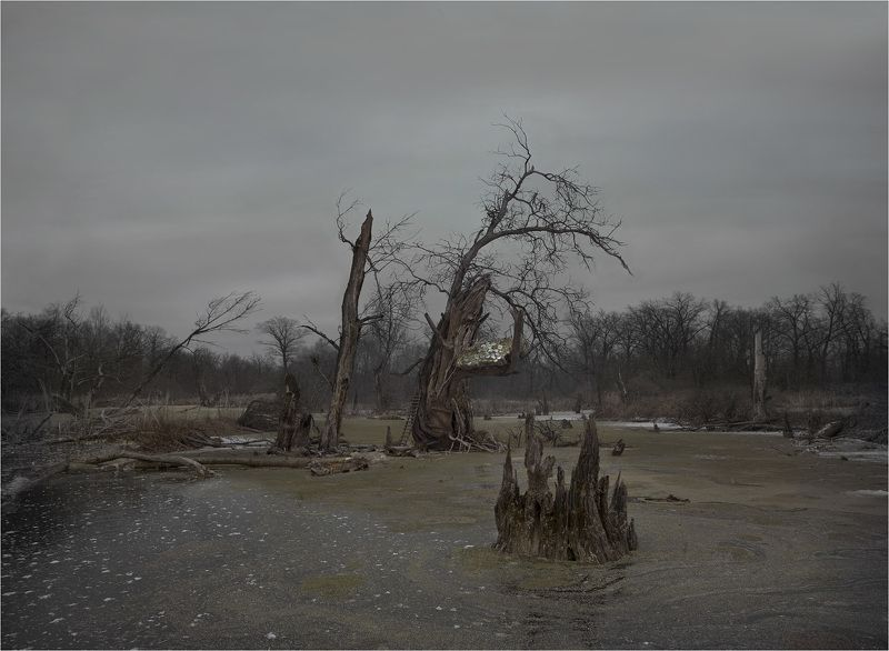 сюрреализм Гнездоphoto preview