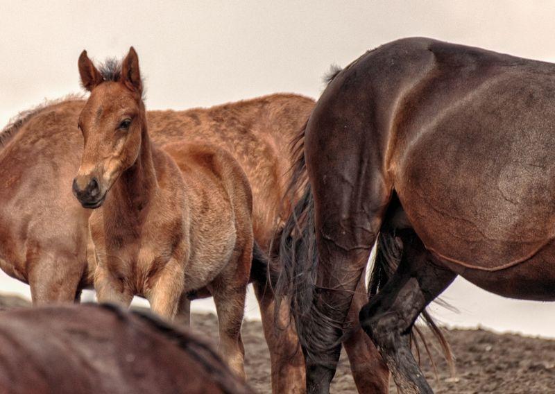 лошади,жеребенок, Охраняем жеребенка.photo preview