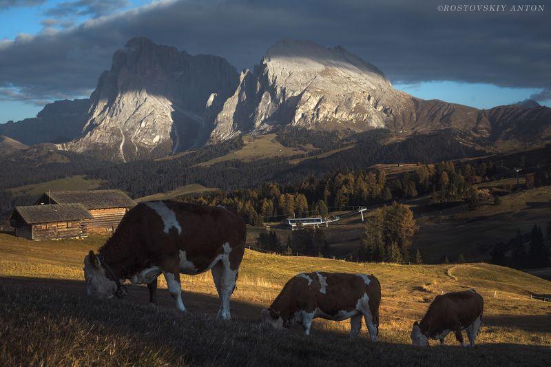 доломиты, Альпы, коровы, коровки, гора, горы, вечер, закат, Италия, фототур, triplaunch, Альпийская гармония photo preview