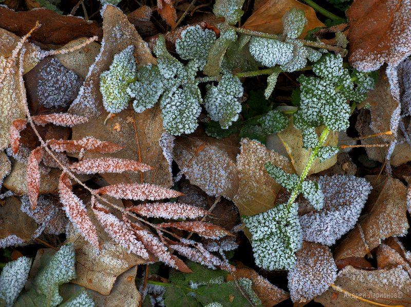 иней, осень, листья, андрейларионов ****photo preview