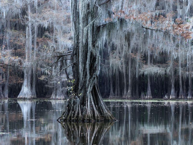пруд, отражение, осень, кипарисы, болото Волшебный лесphoto preview