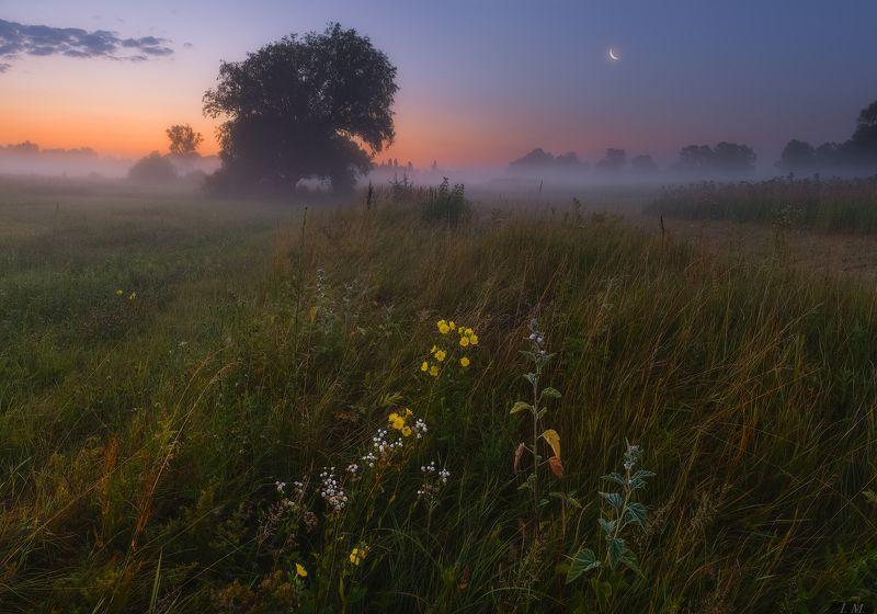 утро, предрассветные сумерки, луна, туман, лето, дерево, луг, пейзаж, summer, morning, twilight, meadow, fog, Misty, before sunrise, sky, clouds, Moon, old, grass, tree, foggy, Landscape, flowers,  ***photo preview