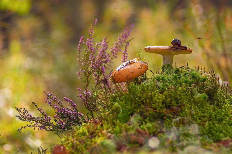 лес грибы улитки сыроежки из жизни улиток и сыроежекphoto preview