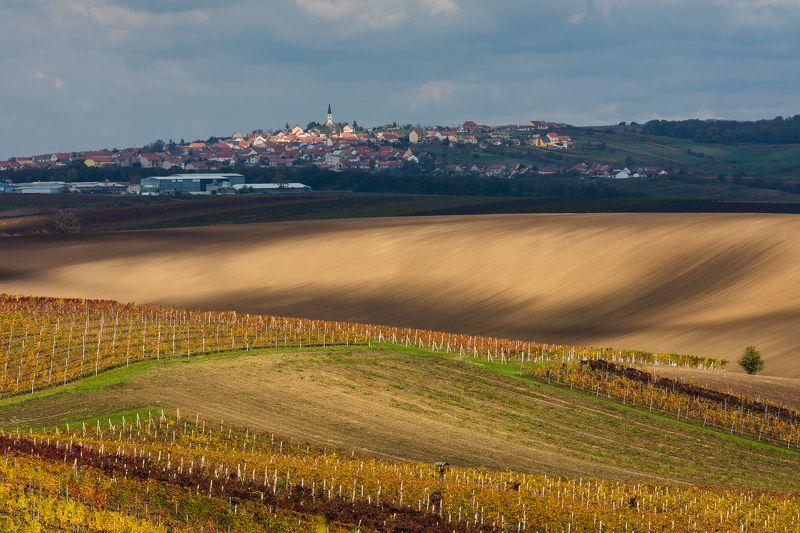 осень, моравия, виноград, поле, чехия Осень в Южной Моравииphoto preview