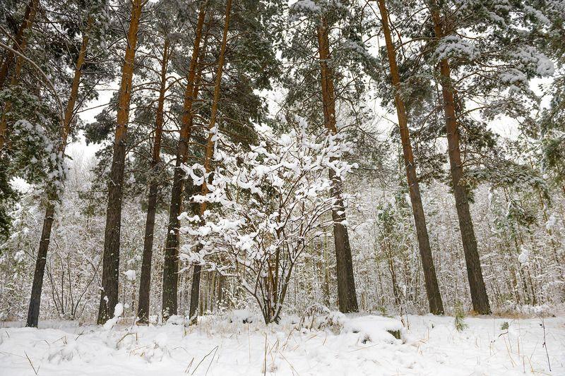 снег первый снегphoto preview