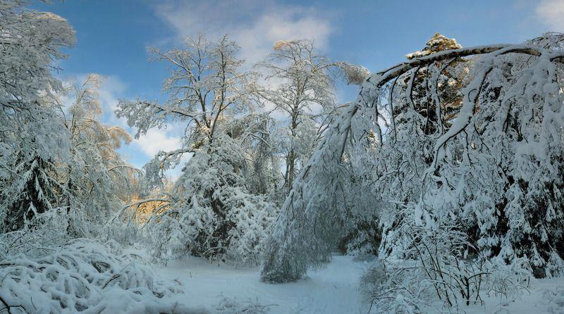 зимний лес Поклонение зимеphoto preview