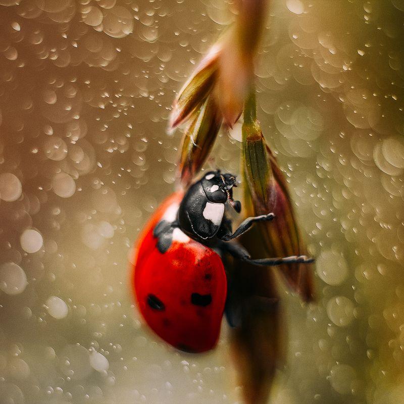 жук макро насекомые Coccinellidaephoto preview