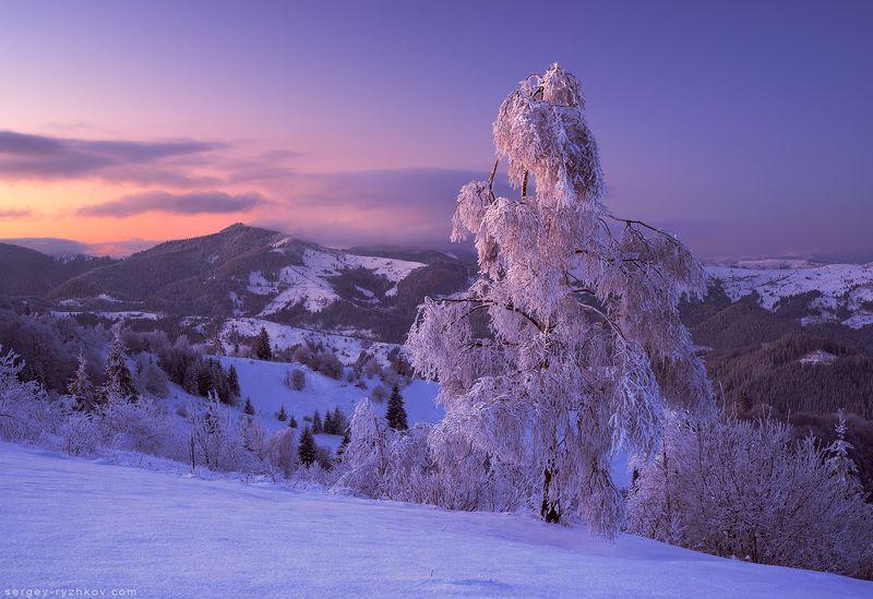 буковина, карпаты, гори, украина, природа, пейзаж, зима, береза, winter, carpathians, ukraine, nature, landscape, mountains, Зима на Буковинеphoto preview