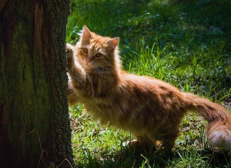 кот, кошка, животное, дерево, трава, лиса foxphoto preview