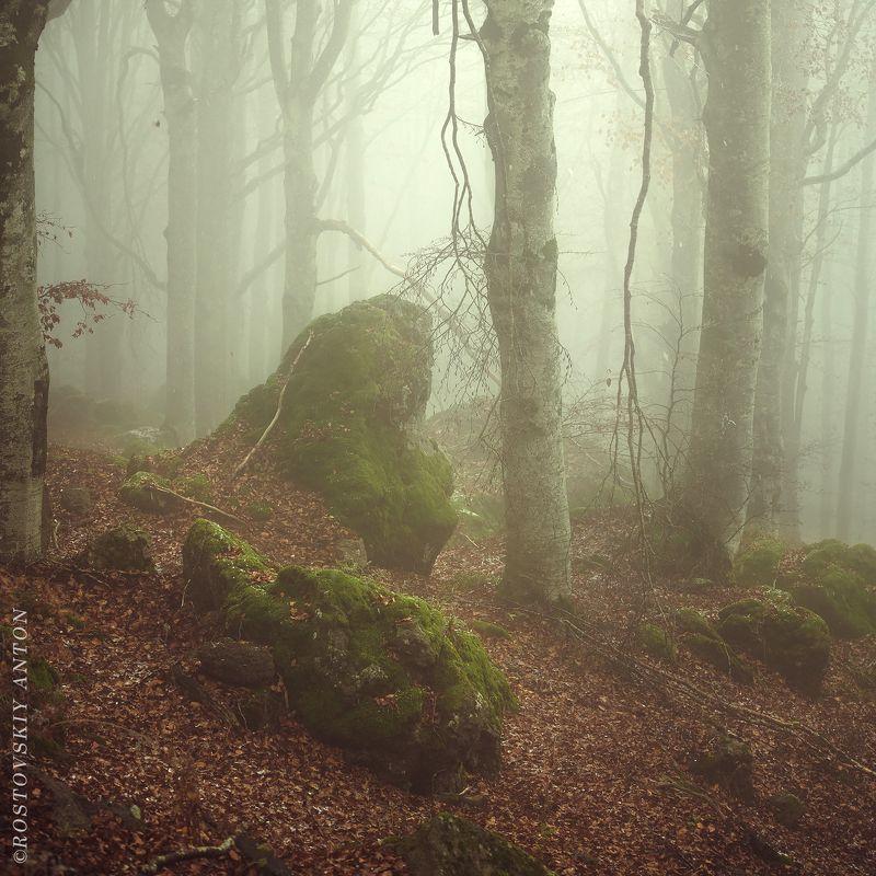 лес, туман, Тоскана, Италия, мох,  Тоскана, однако)photo preview