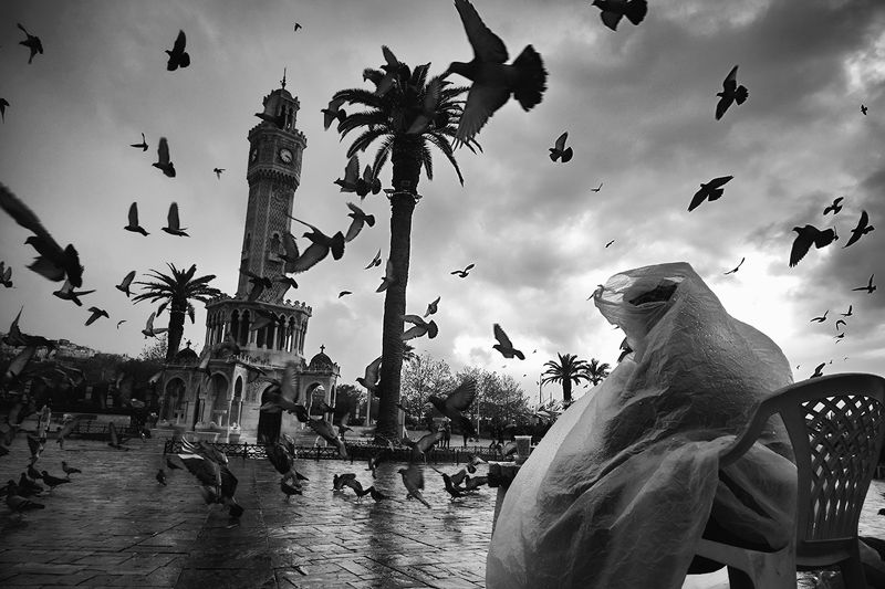 street,pingeon,mood,izmir,konak,blackandwhite pingeon dance...photo preview