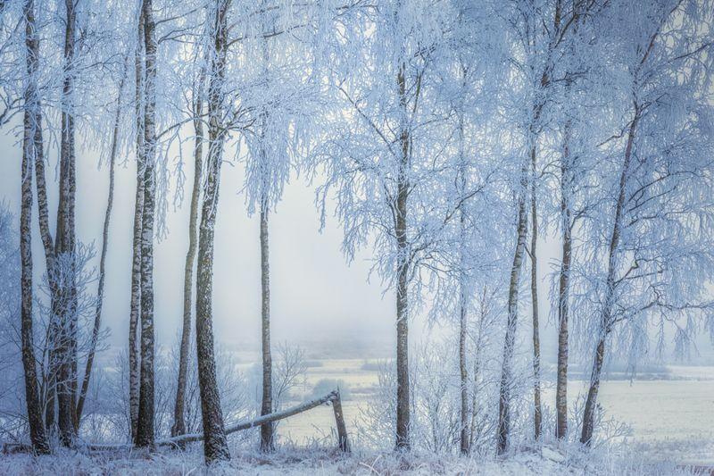 пейзаж, зима, снег, мороз, россия, природа, лес Декабрьphoto preview