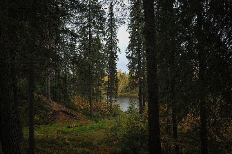 природа вода водоем озеро пруд растение растительность деревья пейзаж поверхность осень ***photo preview