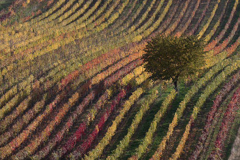 осень, моравия, виноград, цвет, диагональ Диагоналиphoto preview
