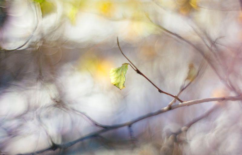 Осенние сюжетыphoto preview