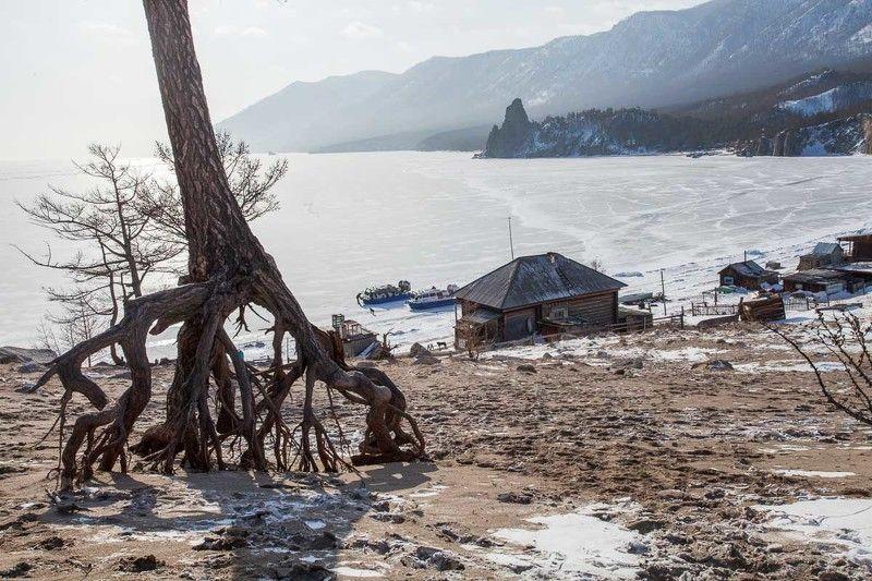 байкал, лед, зима, дерево, корни, лиственница, дом, деревня, бухта Бухта Песчаная. Байкалphoto preview