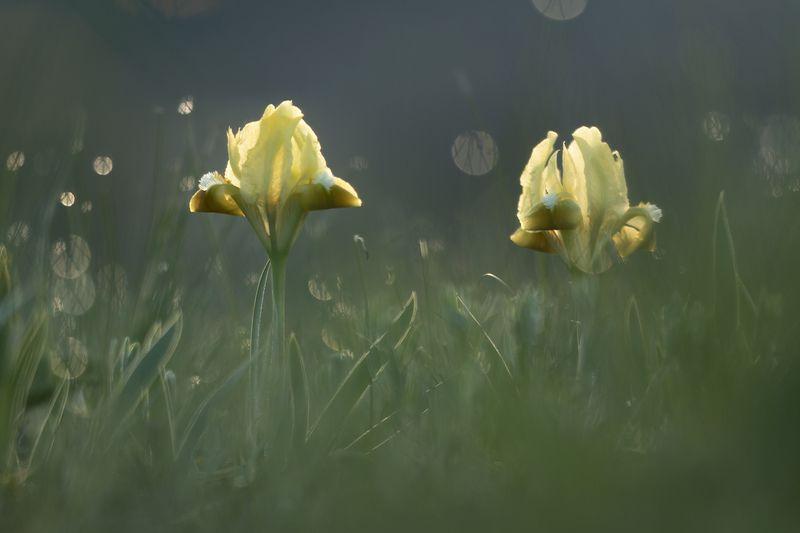 Грёзы по веснеphoto preview