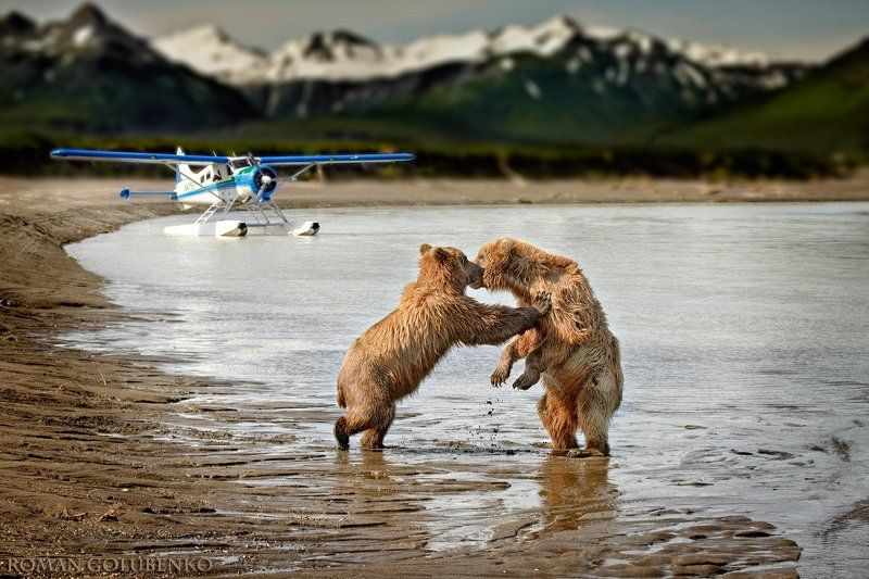 Прощай, турыст!  //  Kiss and Fly,  Alaska Style.photo preview