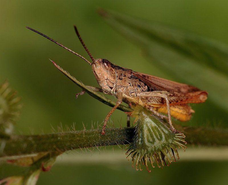 лето, трава, кузнечик Жил кузнечик у ростка...photo preview