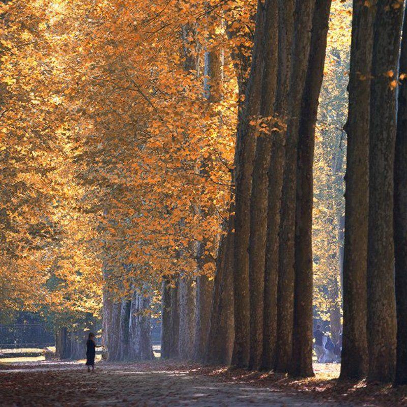Autumn in Versaillesphoto preview