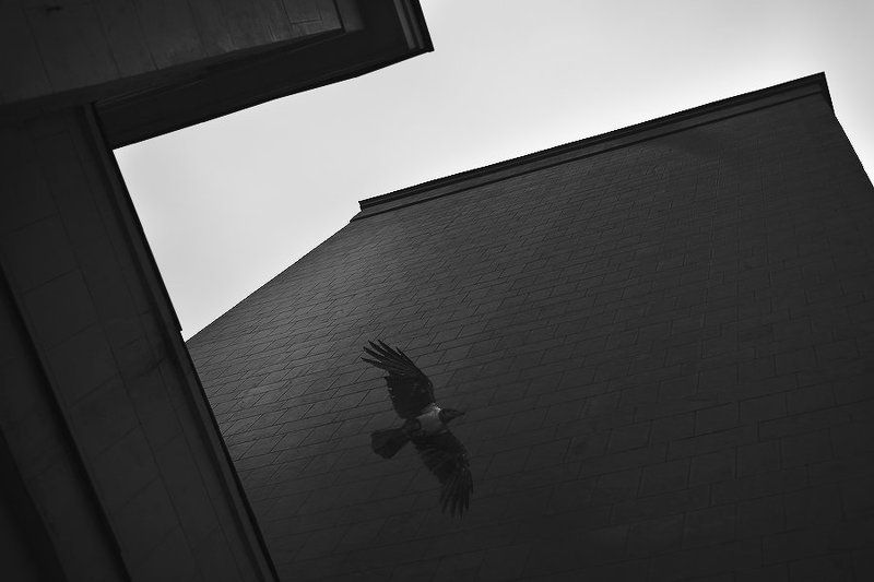 улицы, тень, здание, стена, ворона, облачно, осень, пасмурно ***photo preview
