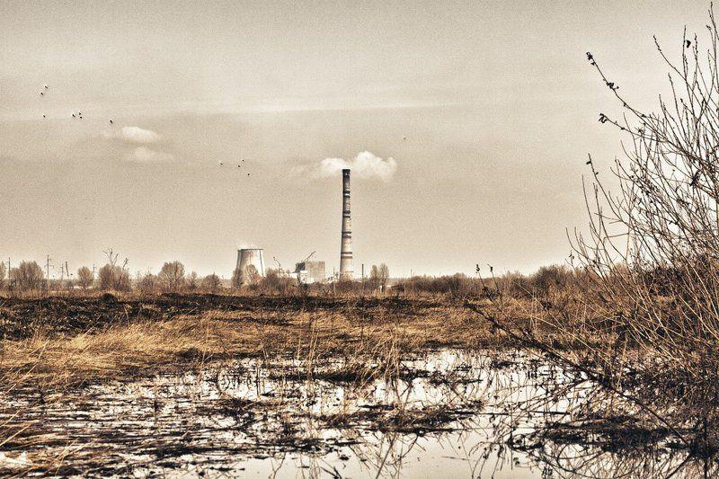 осень, уныние, пейзаж, тец, желтый, сухой, негатив, упадок photo preview
