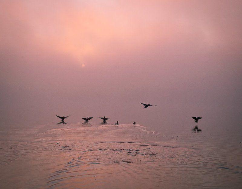 киев,днепр,оболонская набережная, Навстречу солнцуphoto preview