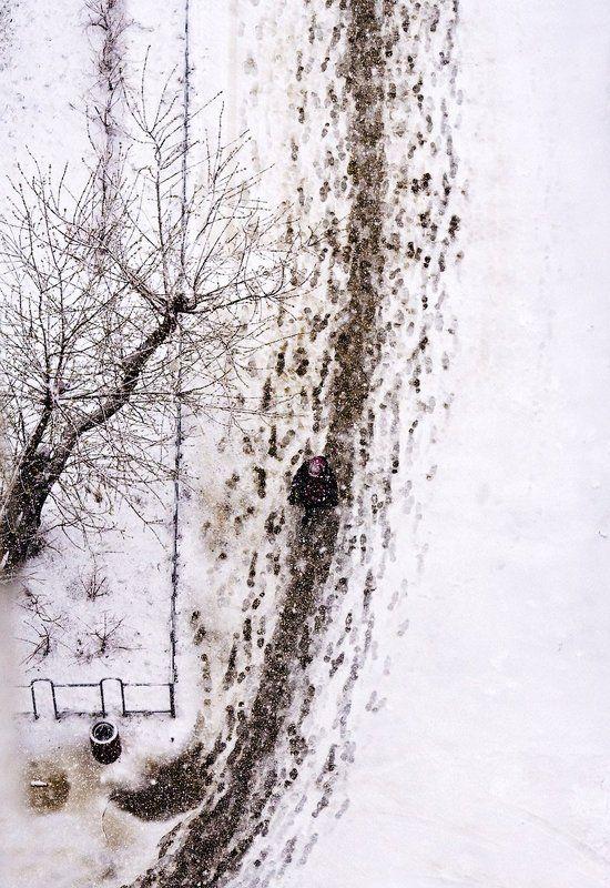 снег, дерево, следы, бело Следы невиданных...photo preview