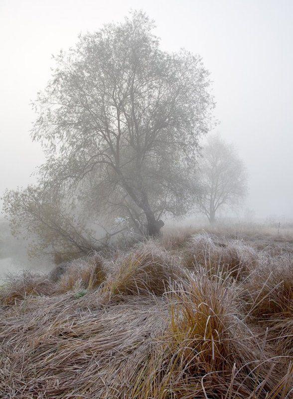 туман на Воронеphoto preview