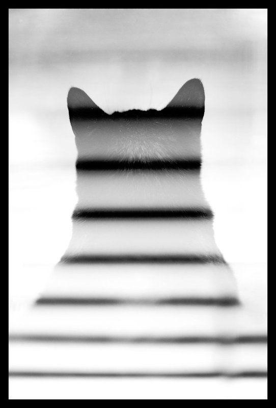 рада, кошка Полосатаяphoto preview