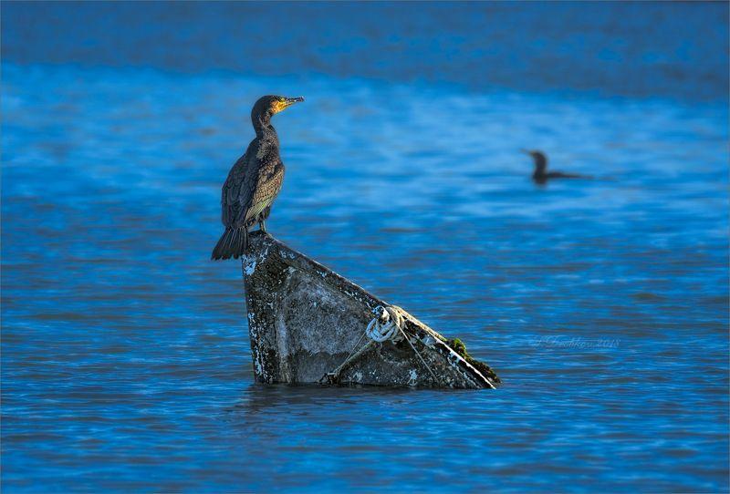 закат, вода, баклан, лодка, фауна Наслаждаясь последним лучомphoto preview