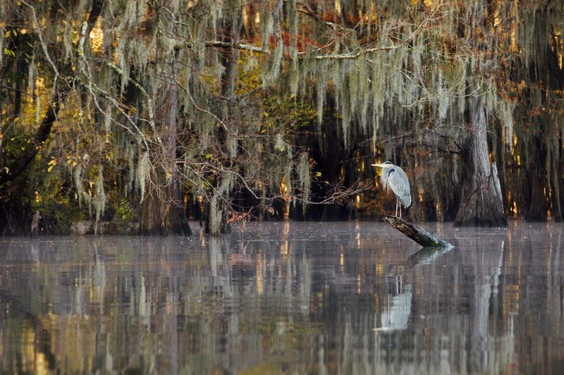 кипарисовые болота cypress swamps Кипарисовое спокоище - 1photo preview