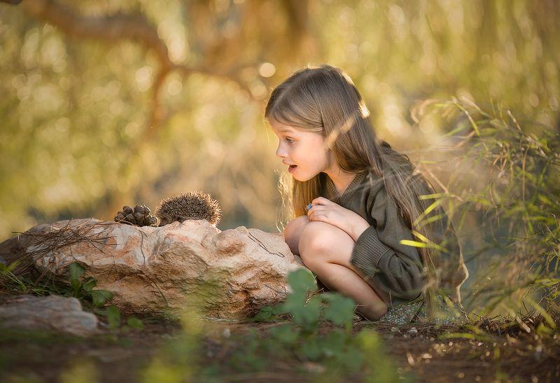 детство, природа, красота, горы, приключения, свет, солнце, деревья, ёж Случайный прохожийphoto preview