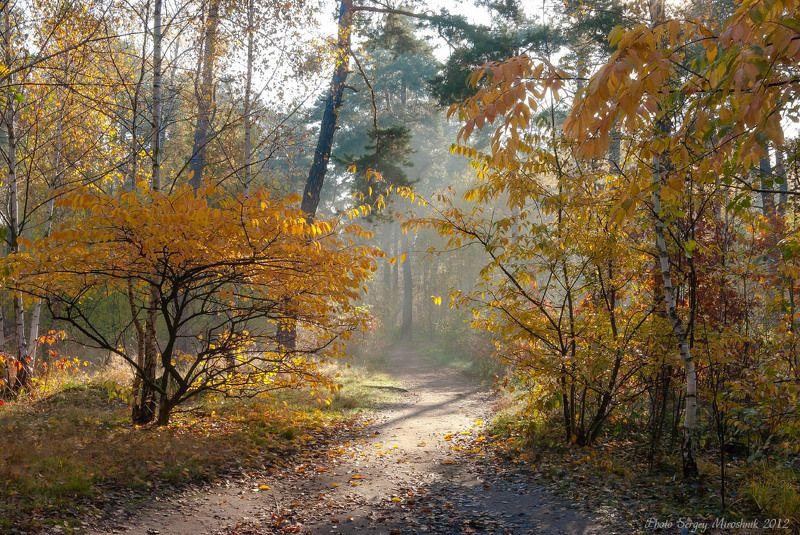 пейзаж, лес, осень, красиво, октябрь, солнце, листья, деревья, лучи, туман Солнечный свет и октябрьский туманphoto preview