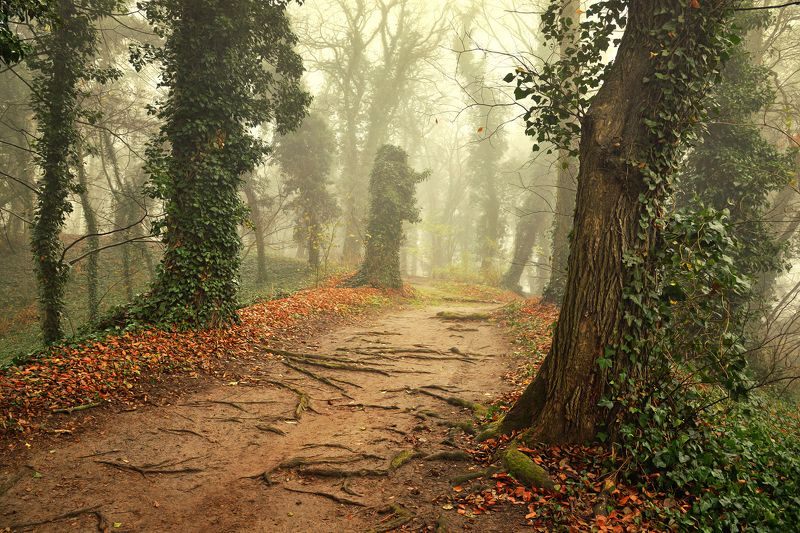 magic garden autumn fall poland dranikowski trees плющ ivy road path mist magic foggy day Magic Gardenphoto preview