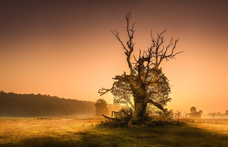 500 years oak eagle in the national park rogalin in poland Oak Eaglephoto preview