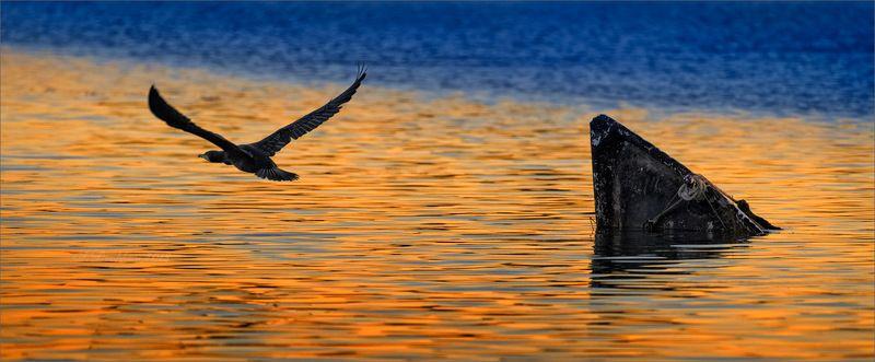 вода, баклан, закат, лодка Вернись!photo preview