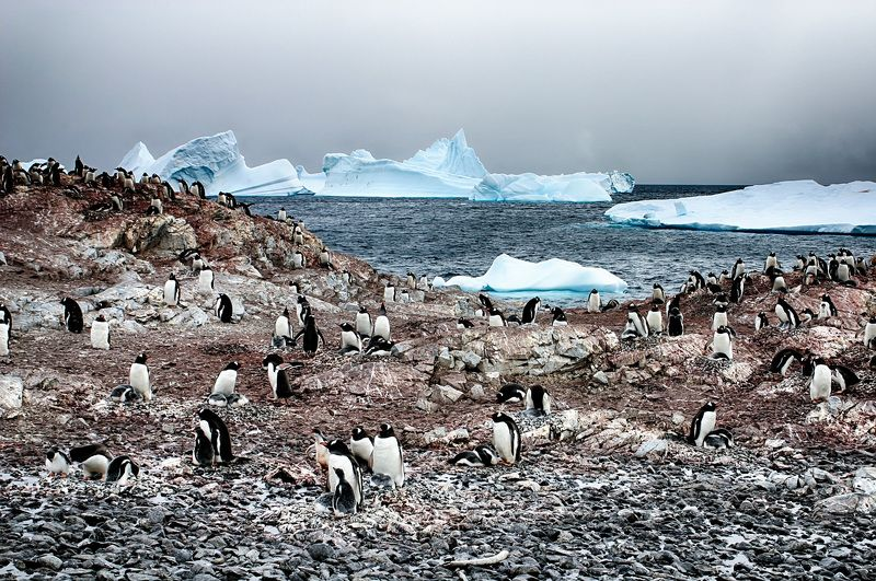 Антарктида 32photo preview
